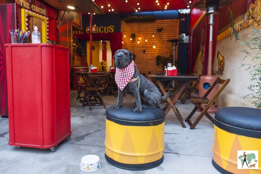 cachorro sentado no banco ao lado de mesas