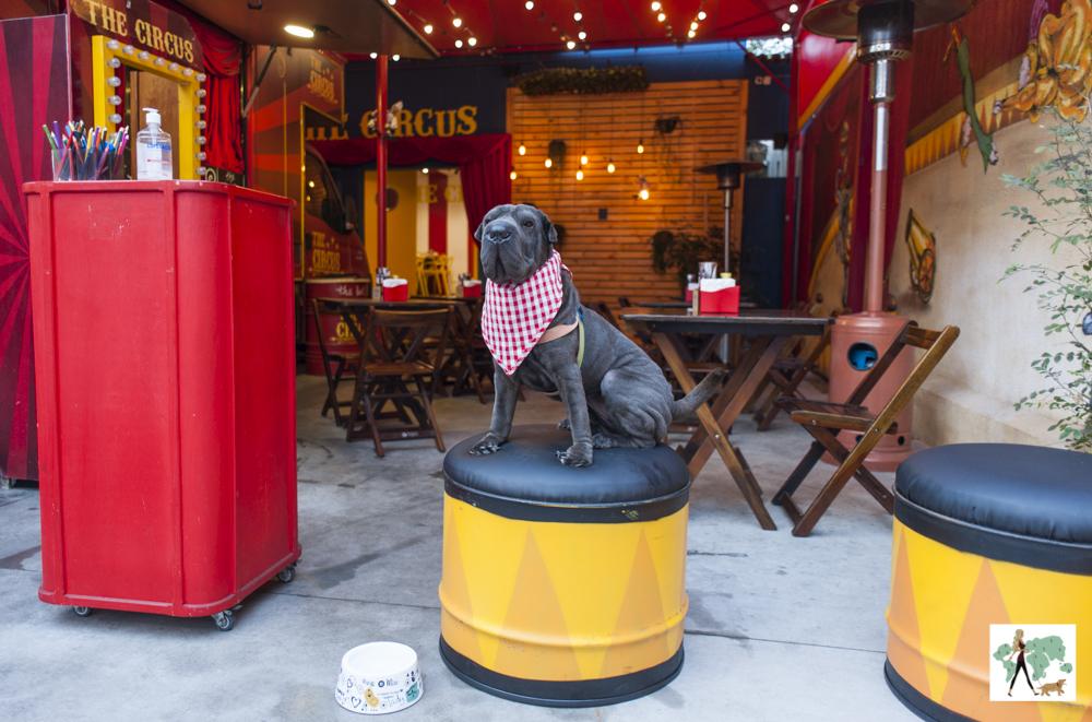 cachorro sentado no puffe