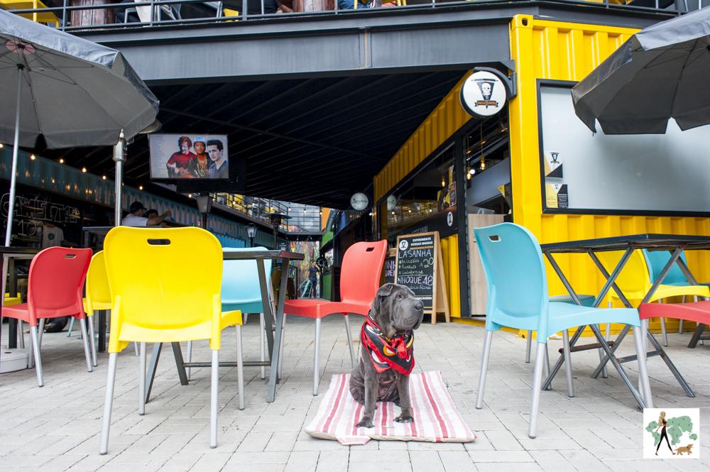 cachorro sentado no meio das cadeiras coloridas