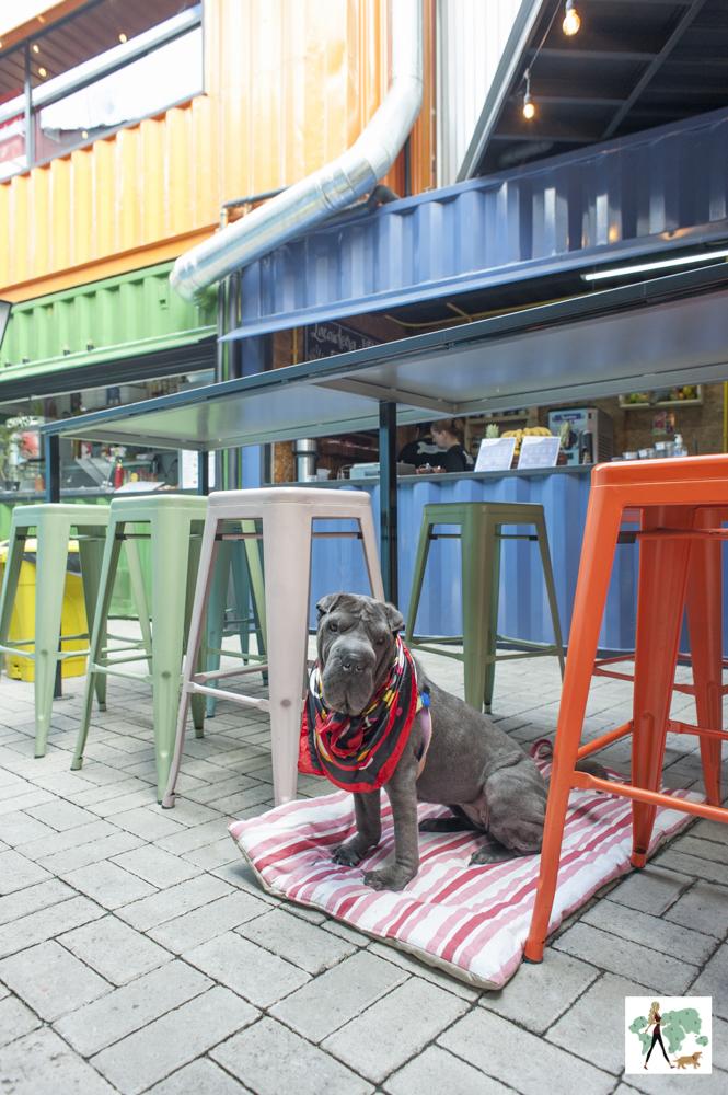 cachorro sentado entre as mesas