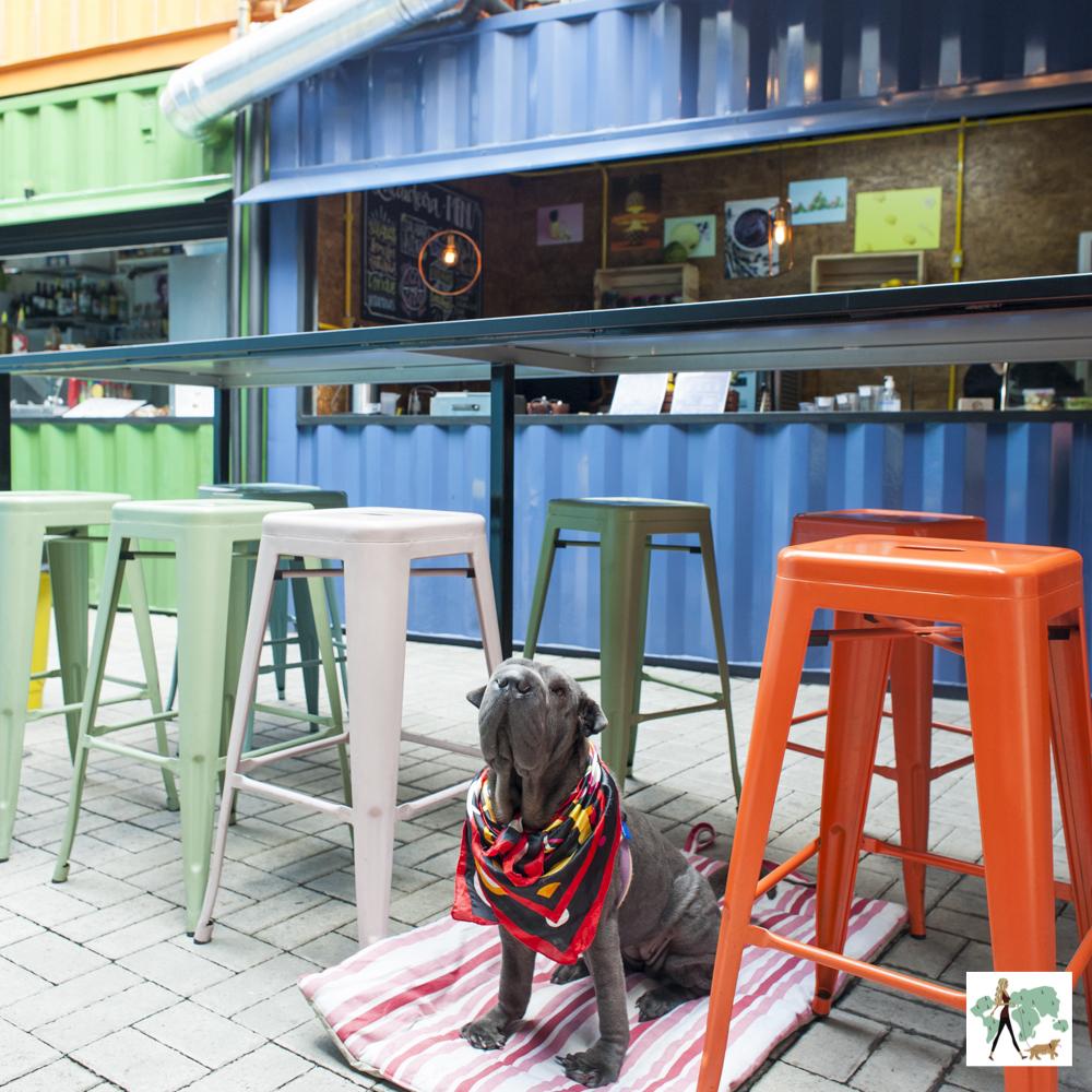 cachorro de bandana sentado