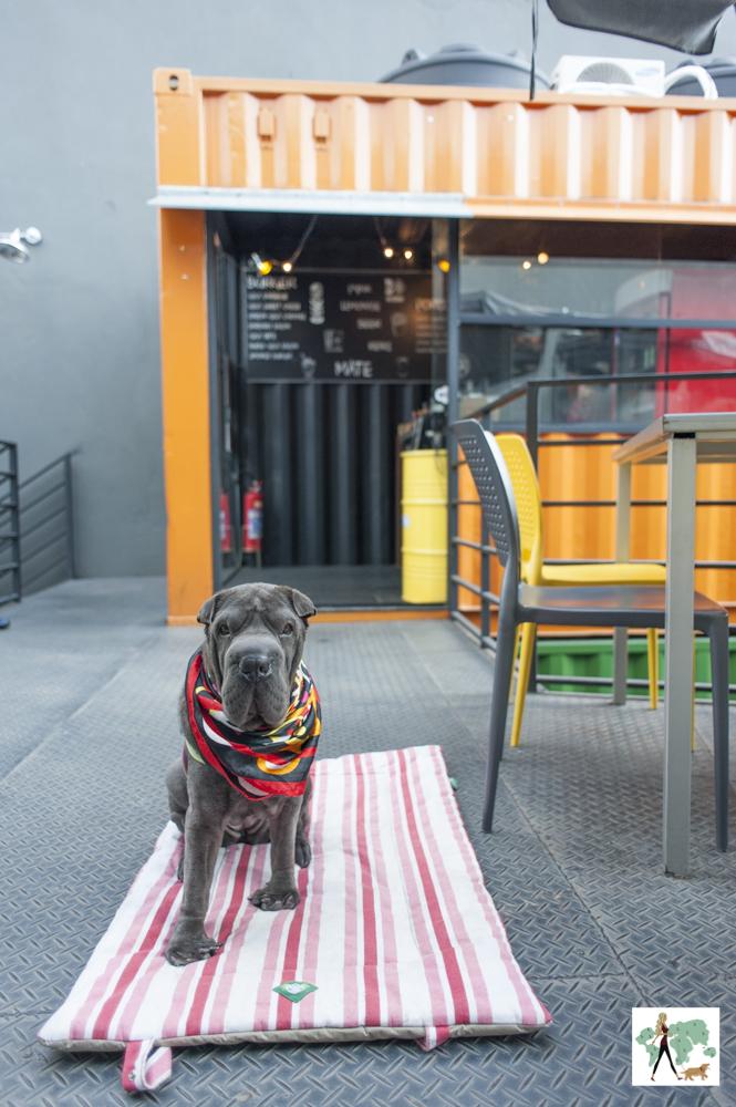 A hamburgueria Gigante na zona norte é pet friendly