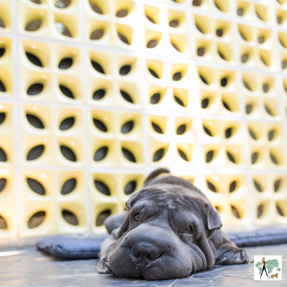 cachorro deitado no chão com cobogó ao fundo