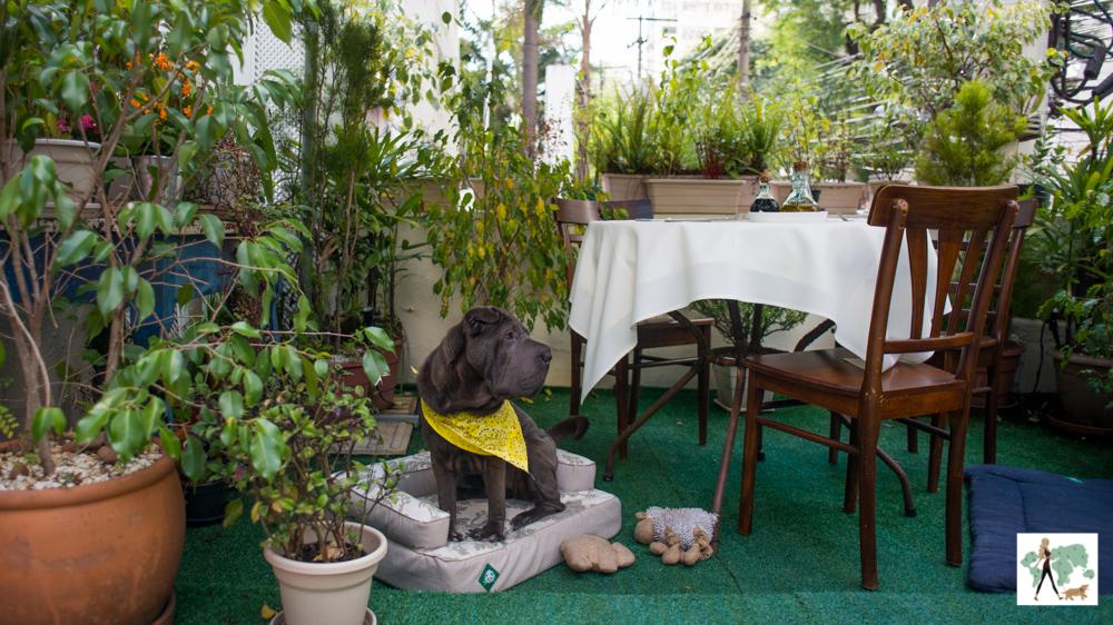 cachorro sentado em cima de caminha ao lado de mesa de restaurante