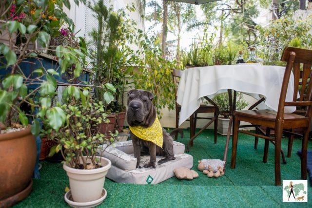 cachorro sentado na caminha no jardim