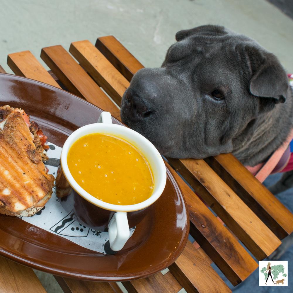 toast na mesa e cachorro apoiado