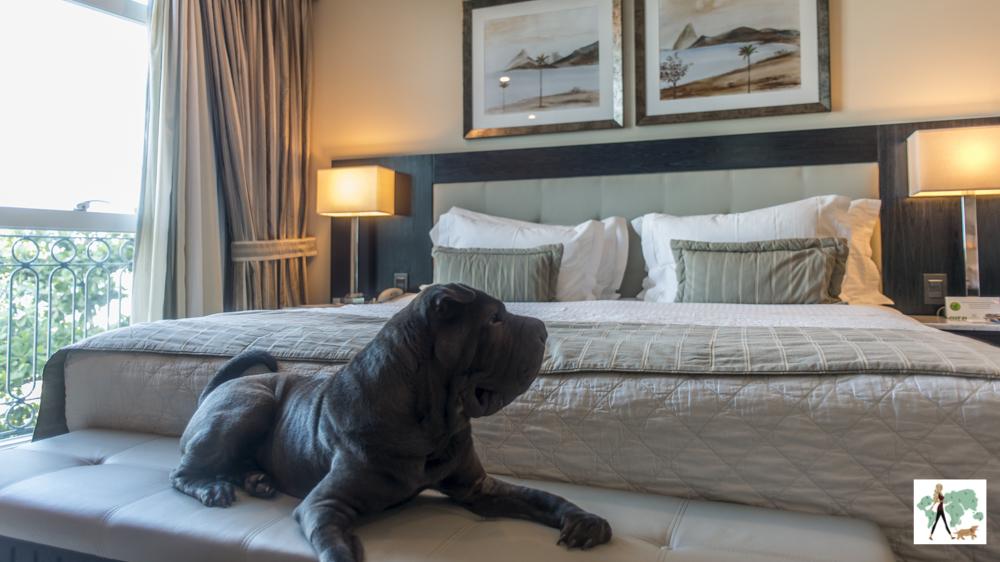 cachorro deitado em cima da banqueta ao pé da cama de hotel