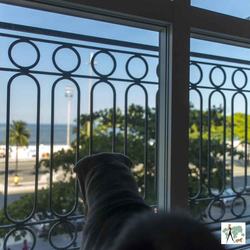 cachorro olhando pela janela