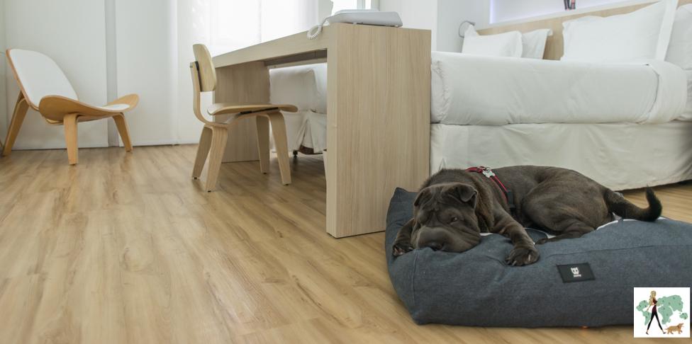 cachorro deitado na cama de cachorro em quarto de hotel