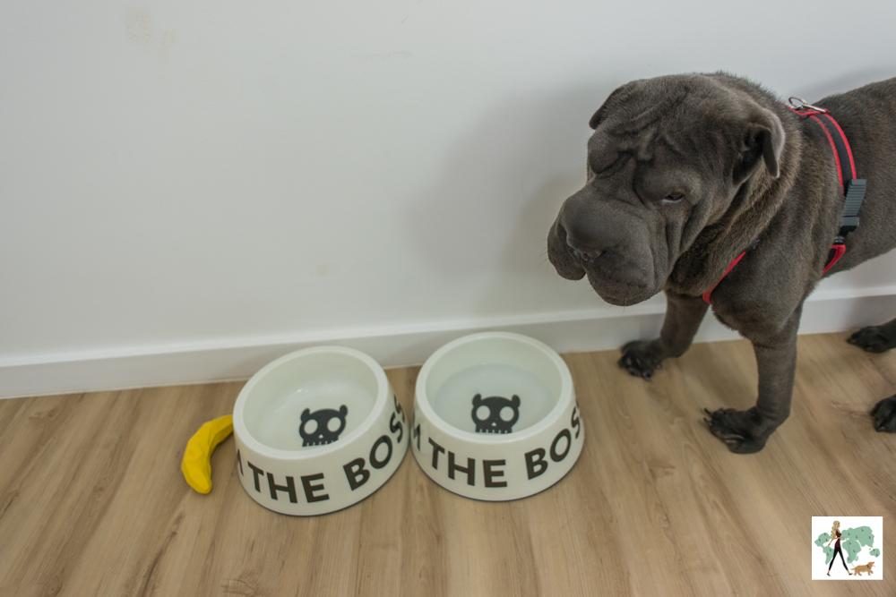 cachorro ao lado de pratos de comida de cachorro