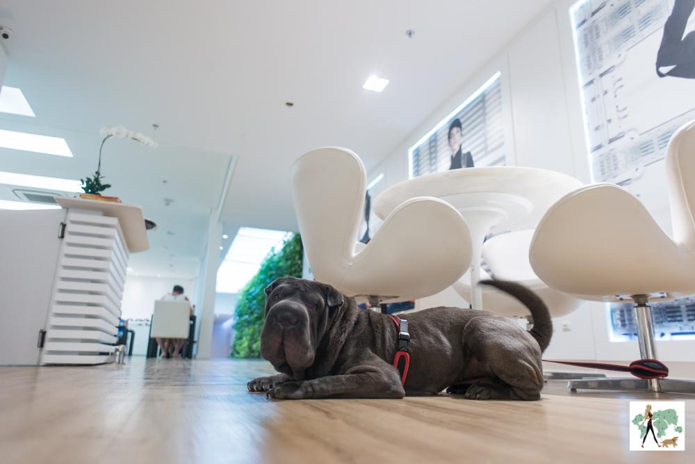 cachorro deitado no restaurante do hotel