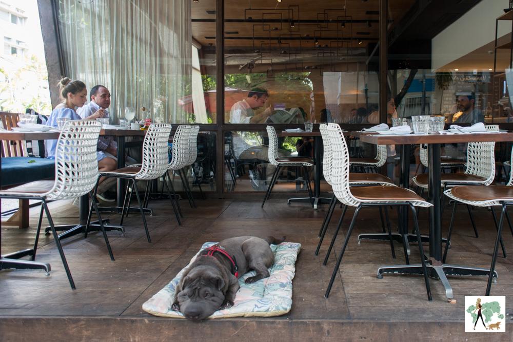 cachorro deitado em cima de almofada em varanda de restaurante