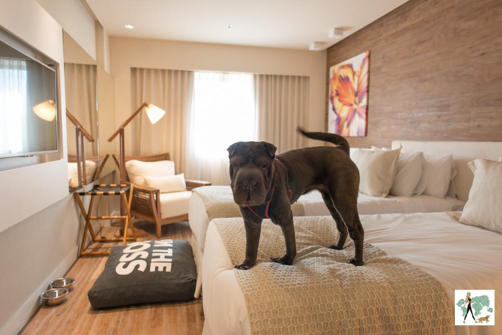 10 hotéis e pousadas pet friendly no Rio