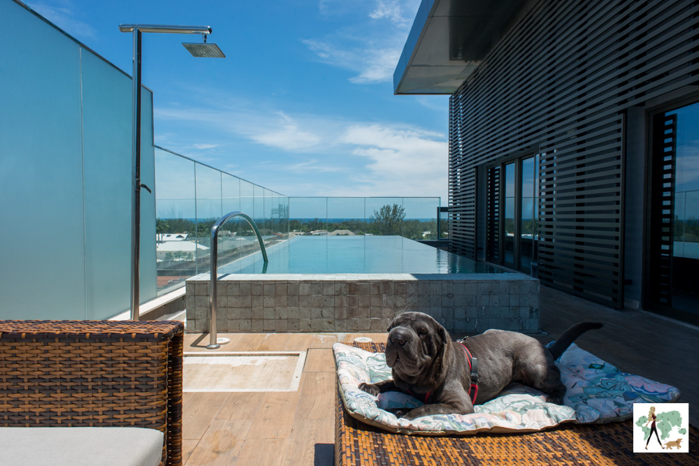 cachorro deitado em cima de almofada com piscina ao fundo