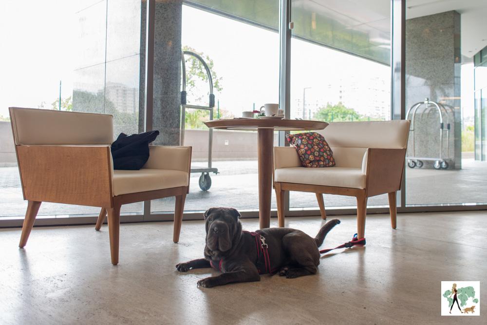 cachorro deitado ao lado de mesa e poltronas