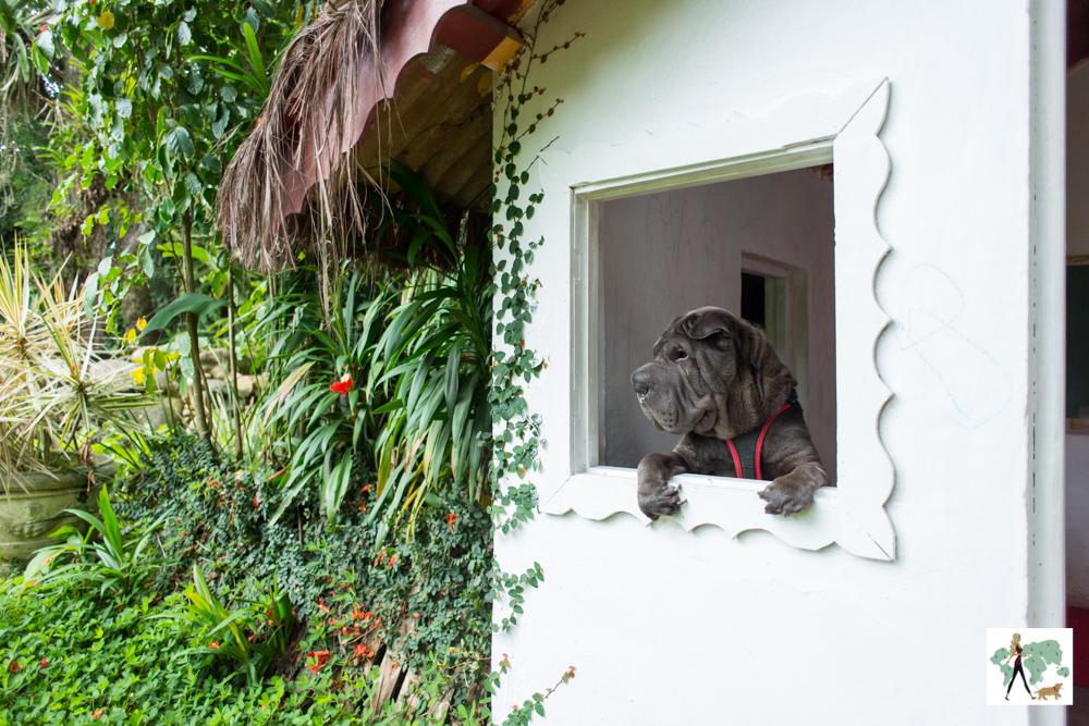cachorro debruçado na janela da casinha
