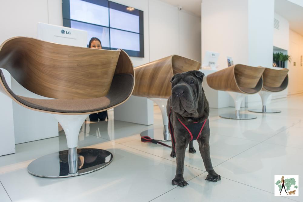 cachorro em pé ao lado de recepção
