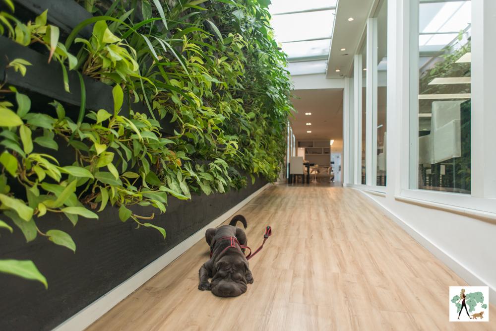 cachorro deitado na rampa de hotel com parede cheia de plantas