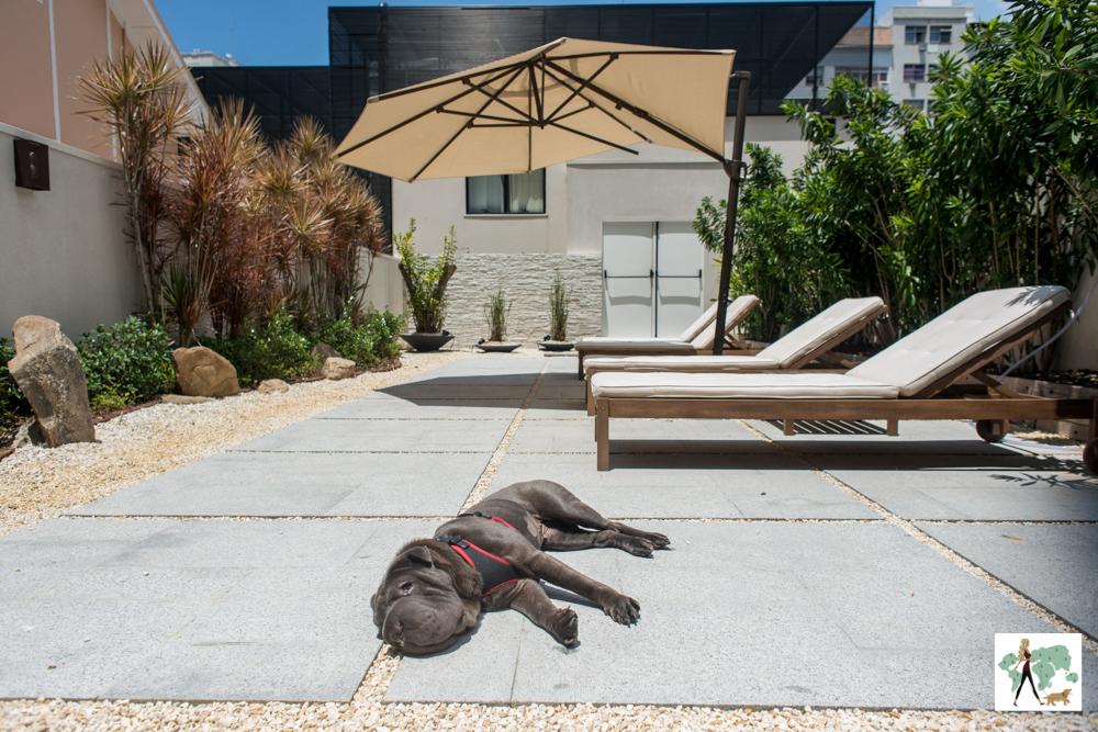cachorro deitado em jardim tomando sol ao lado de espreguiçadeiras