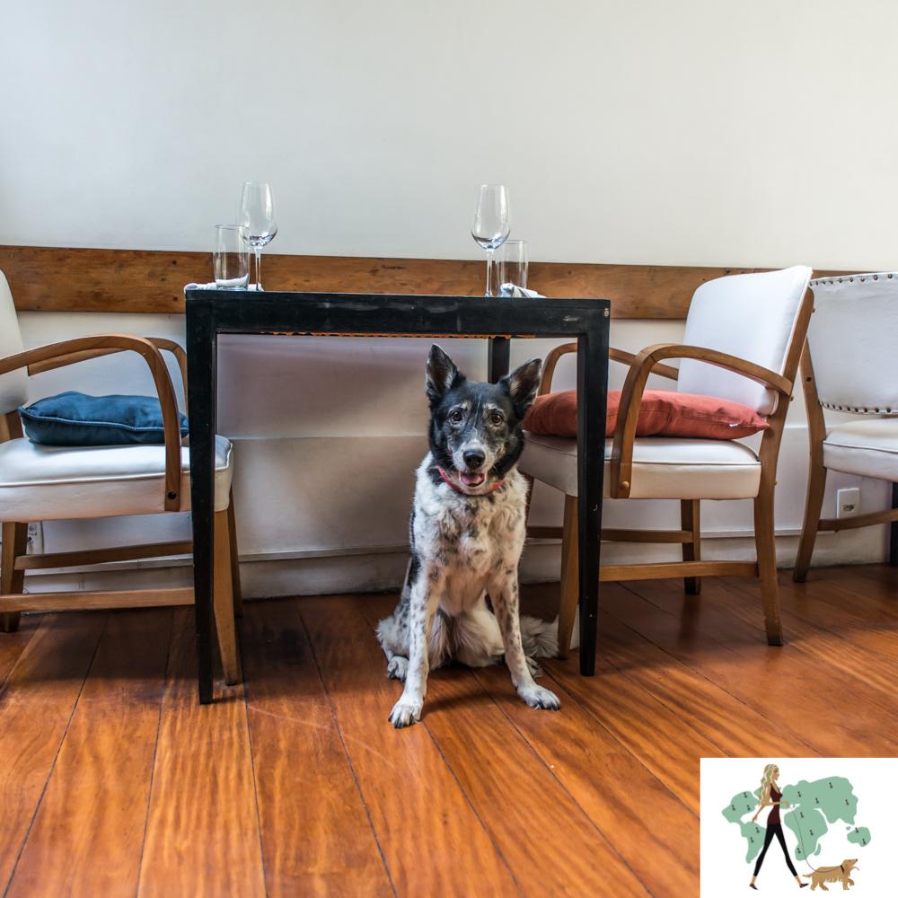 cachorro sentado entre cadeiras