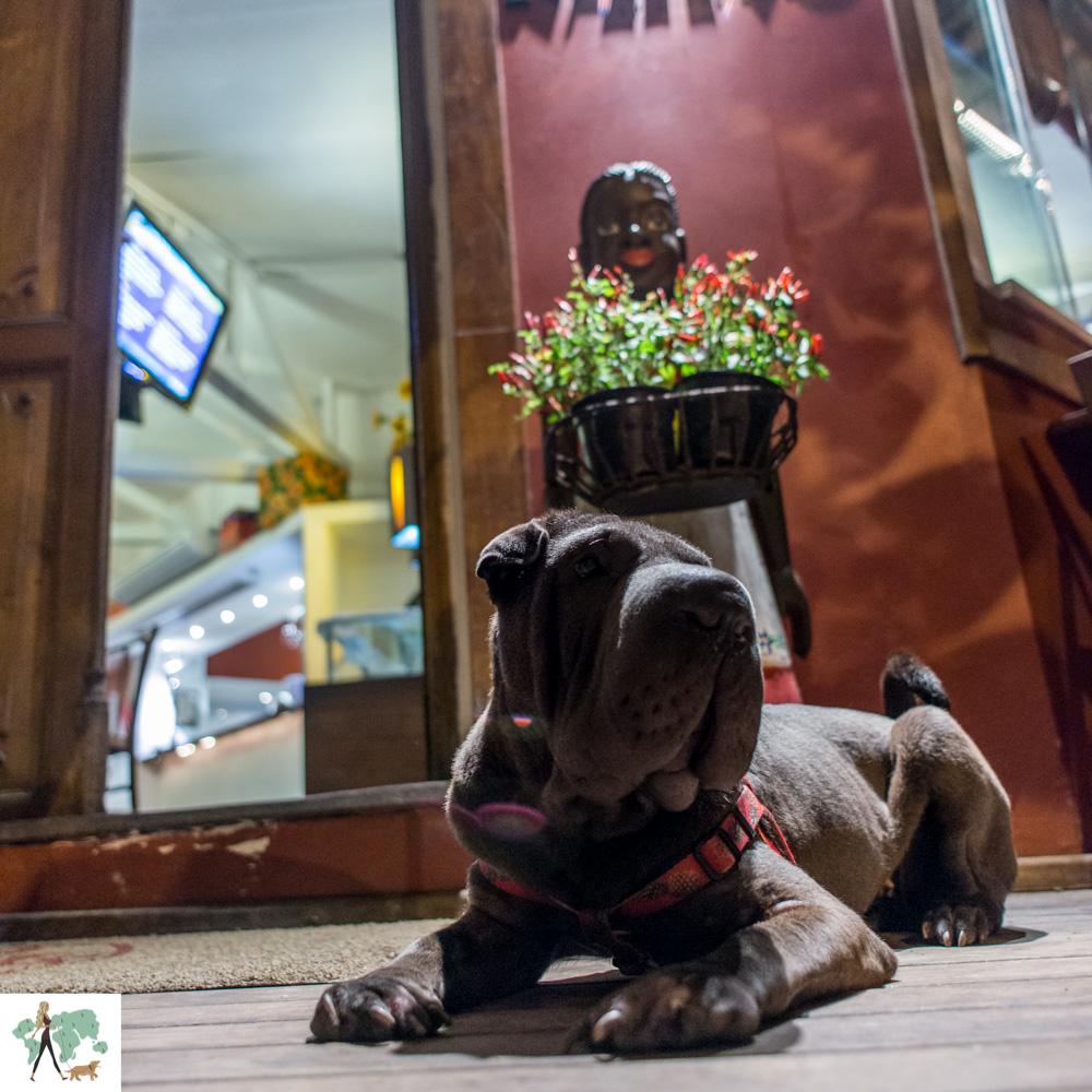 cachorro deitado na porta do restaurante