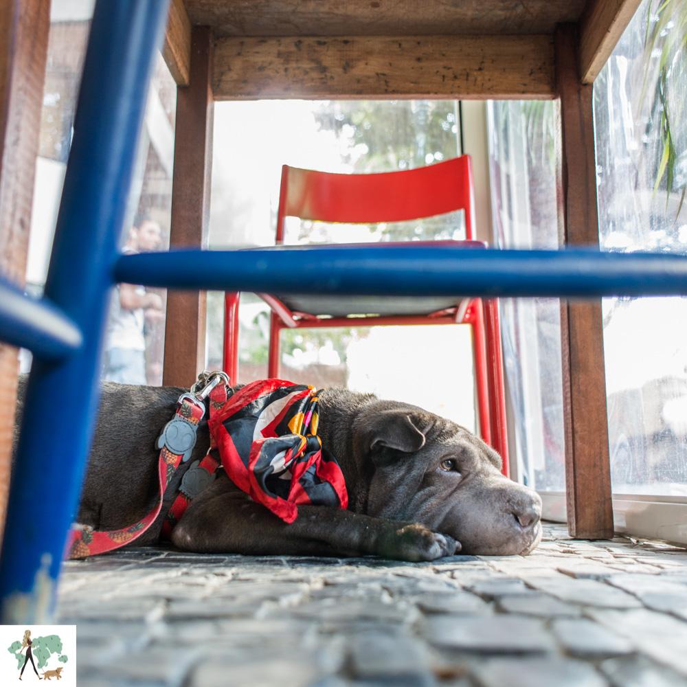 cachorro sentado debaixo da mesa