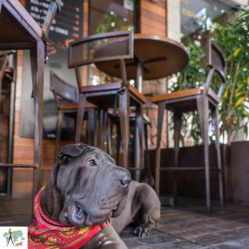 restaurantes pet friendly no Rio