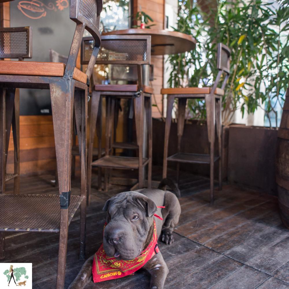 cachorro deitado em deck de restaurante