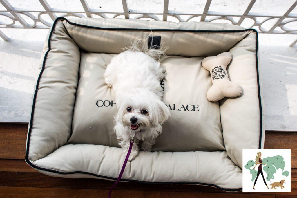 cachorro em cima de cama de cachorro