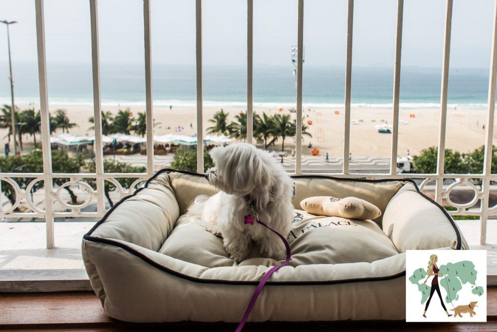 cachorro em cima da cama com a praia ao fundo