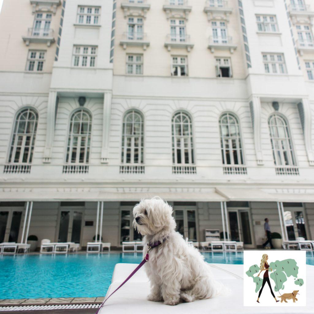 cachorro em cima de banco ao lado de piscina