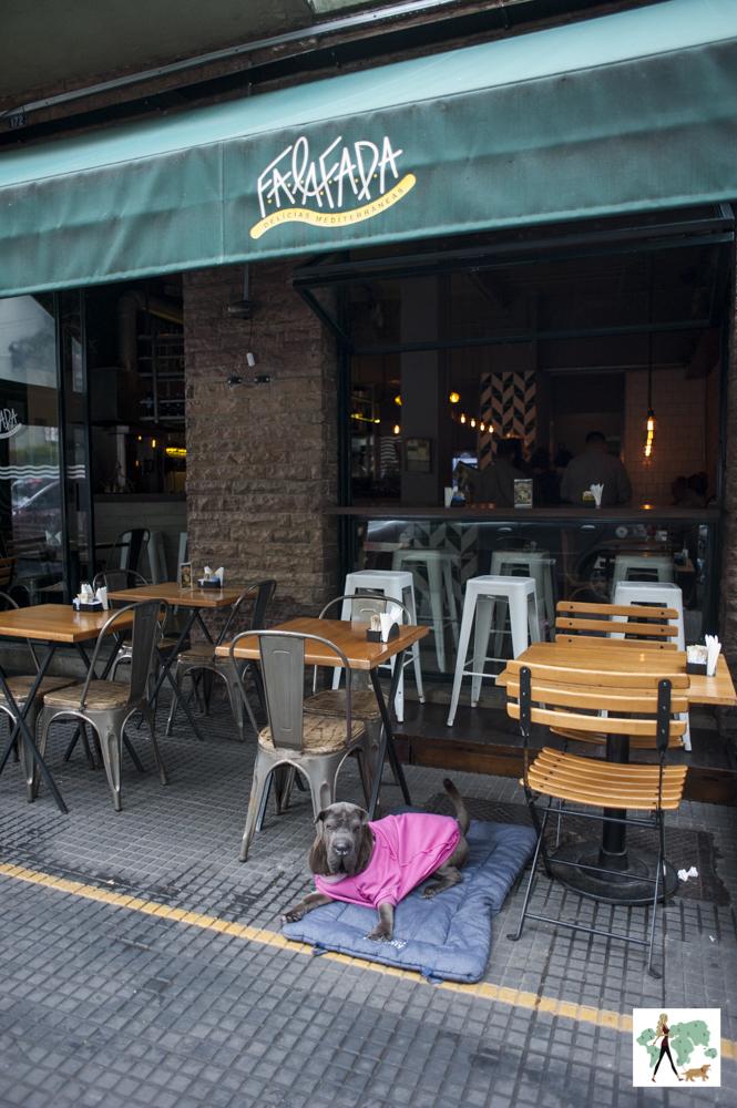cachorro deitado em cima de almofada na frente de restaurante