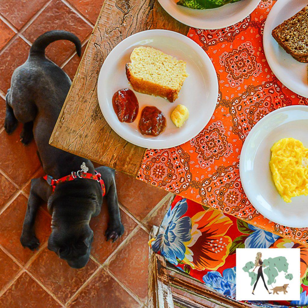 cachorro deitado e mesa com prato servido de bolo
