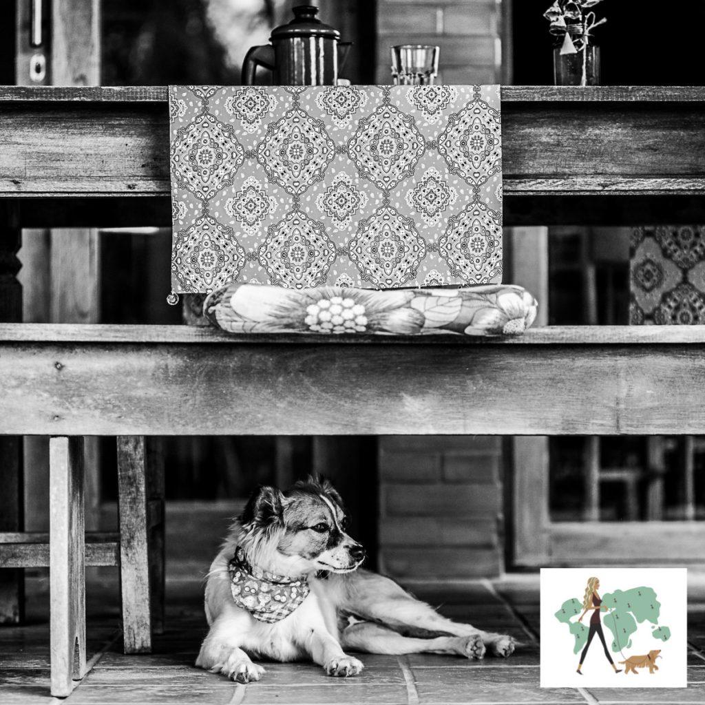 cachorro sentado embaixo de banco