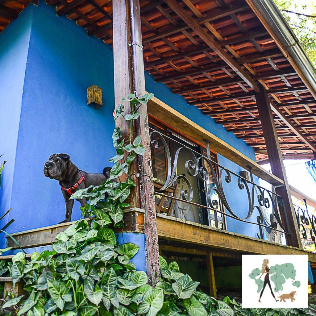 cachorro na varanda de casa com paredes pintadas de azul
