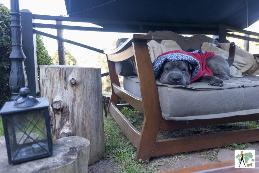 cachorro em cima de sofá