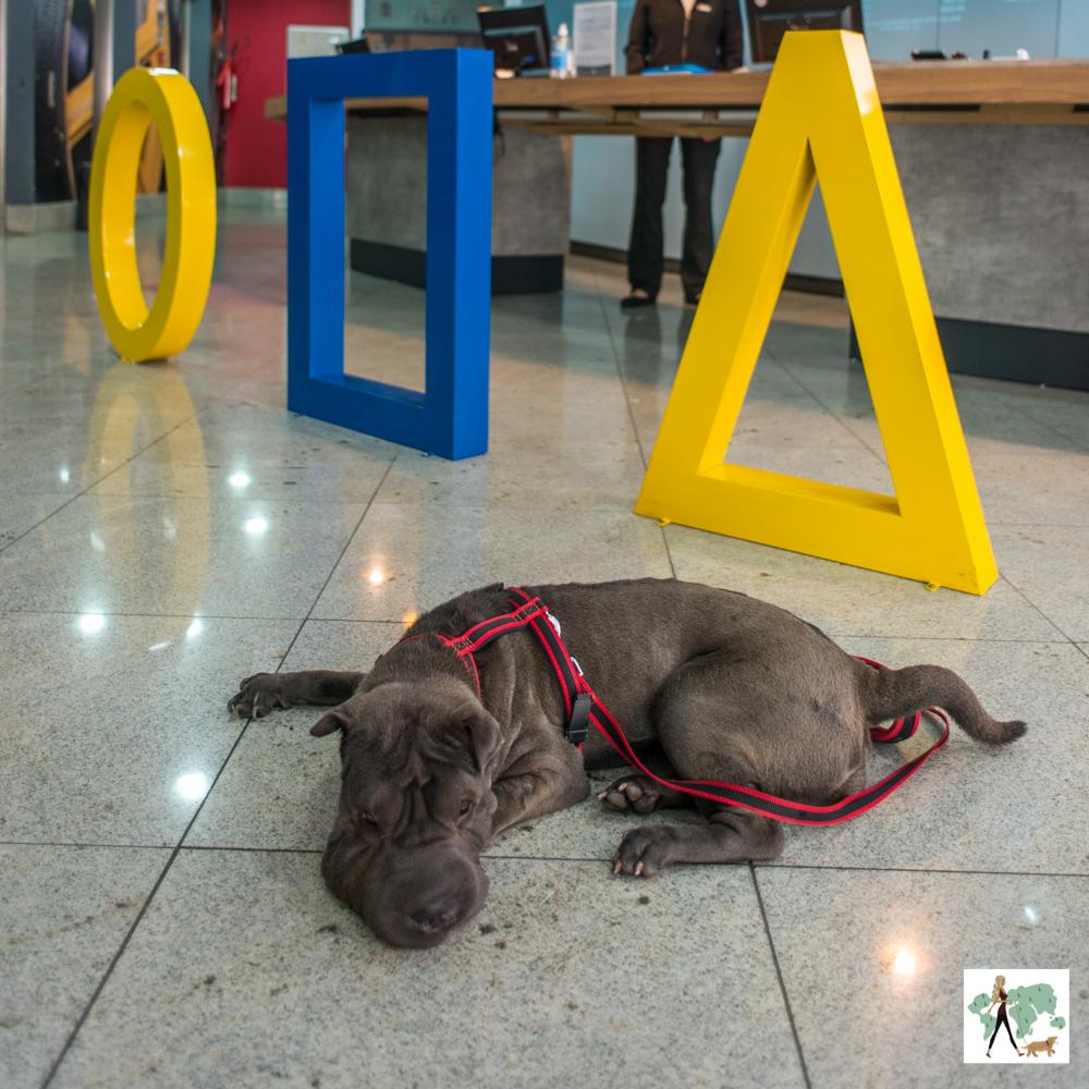 cachorro deitado em lobby de hotel Ibis