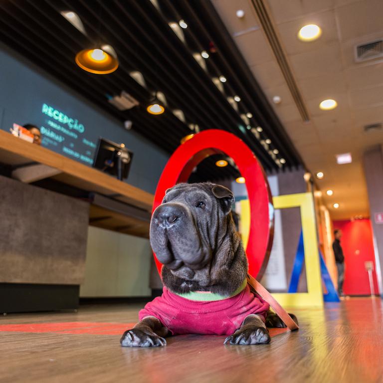 cachorro deitado em lobby de hotel