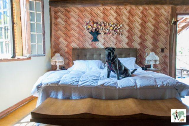 cachorro sentado na cama de hotel