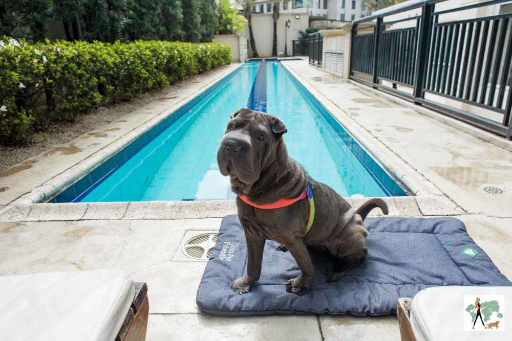 cachorro em cima de almofada ao lado de piscina