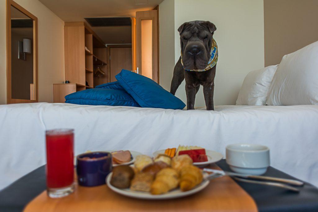 cachorro de pé em cima da cama de hotel e bandeja de café da manhã