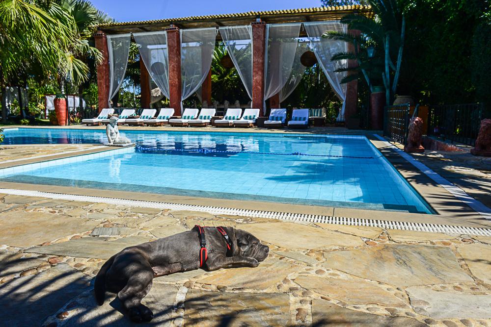 cachorro deitado ao lado de piscina de hotel