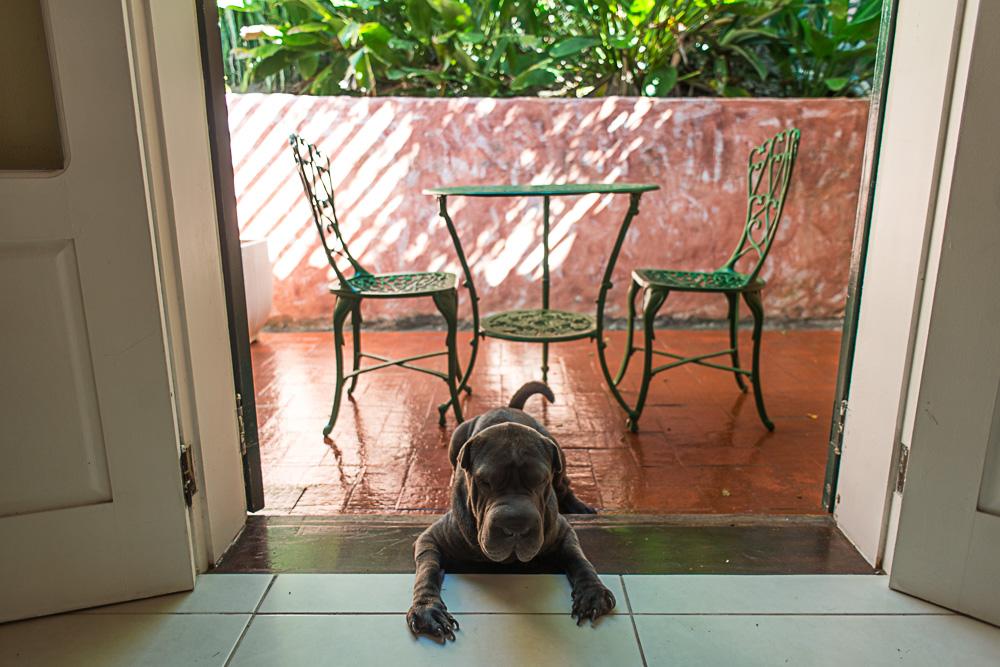 cachorro deitado na entrada de varanda