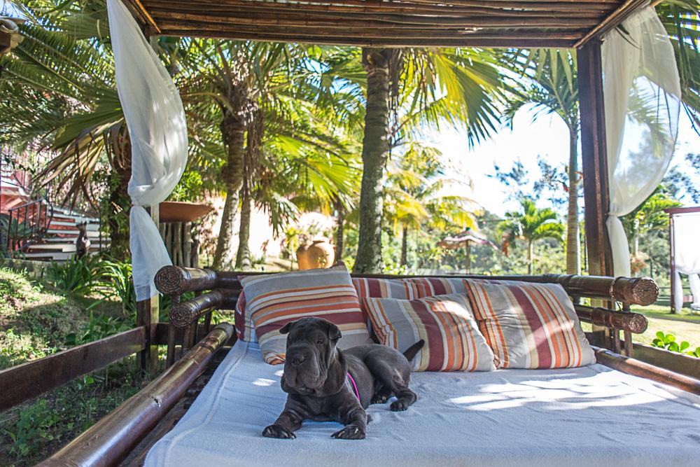 cachorro em cima de gazebo de hotel