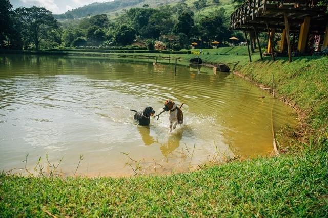 dois cachorros brincando no lago