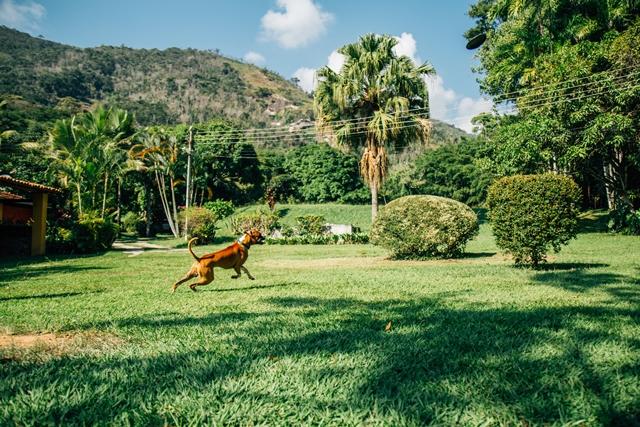 cachorro correndo no gramado