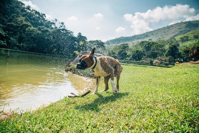 cachorro se chacoalhando ao lado de lago