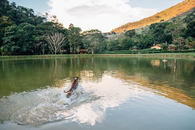cachorro nadando no lago