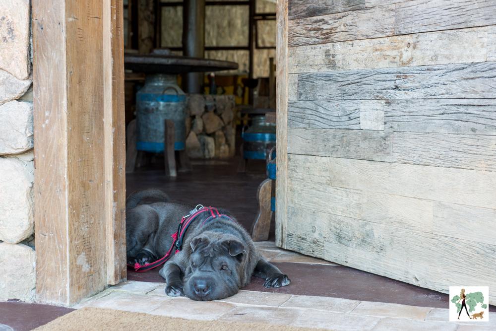 cachorro deitado na frente da porta de pousada