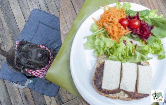 cachorro sentado olhando para a salada